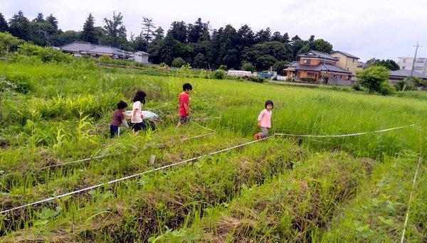 20140705daizubatake.jpg
