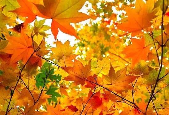 秋の遠足.jpg
