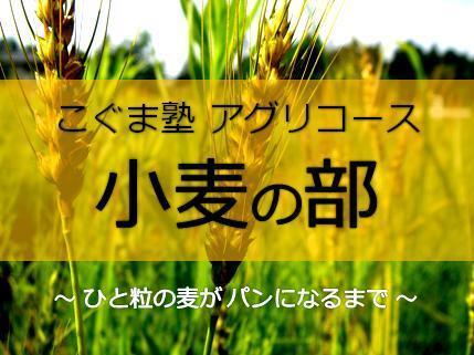 16-17aguri_komugi_ban.jpg
